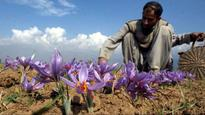 Kashmir Saffron all set to take global flight, new job opportunities surface for unemployed youth