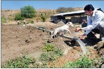 An oasis in drought-hit Maha, village sets e...