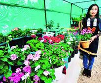 Flower-bowl Mao hosts show