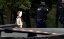 Man In 'Panda Suit' Who Stormed Baltimore Fox Station Shot By Police
