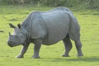 Kaziranga National Park Opens Early