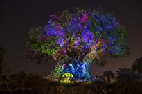 /C O R R E C T I O N -- Walt Disney World Resort/