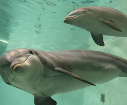 Yes, boss! Pollution blinding Gangetic dolphins, ministry's U-turn to support Uma