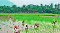 Paddy prices likely to increase soon in Andhra Pradesh