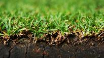 Scientists develop 'Grassoline', touted as next major source of energy