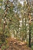 Spring in the Middle Himalayas: Shyamkhet, Uttarakhand