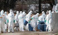 Japan orders chicken cull on third bird flu outbreak in less than a week