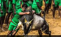 In Tamil Nadu, Group Holds Mini-Jallikattu Defying Supreme Court Order