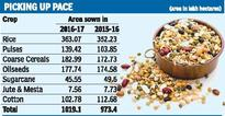 Pulses, rice continue to drive acreage growth this kharif