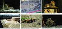 Predominant hubs of zoos