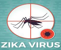 Local Zika outbreaks in United States 'likely': U.S. official