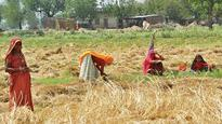 Govt to purchase moong, peanuts under PSS