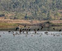 Bengal tribal village frowns visitors, protects guest migratory birds