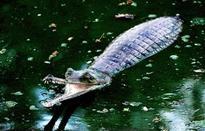 'Crocodile fears' in Karnataka-Tamil Nadu relations