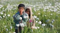 Efforts to curb Afghanistan's opium cultivation stutter to a halt in Helmand
