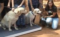 A Walk For The Homeless Dogs In Bengaluru