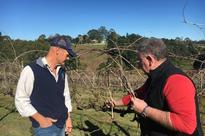 Tony Thompson is trialling the microbes after frost caused thousands of dollars in damage to one of his vineyards.