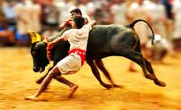 Centre lifts ban on bull-taming sport Jallikattu in TN; activists slam move