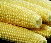 South Korea's KFA buys about 120,000 T corn in tender