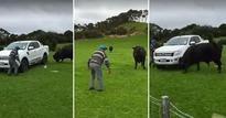 'Dad, stop being a d***!': Crazy 81-year-old koro takes on 'mad' bull
