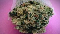 Good news, stoners: Study links daily marijuana use to lower BMI