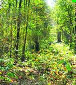 Jharkhand seeks exemption from forest clearance and five batallion CRPF from Centre
