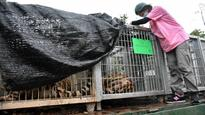Thai wildlife officials begin removing 137 tigers from temple