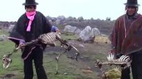 Cold weather kills 180,000 alpacas in Peru