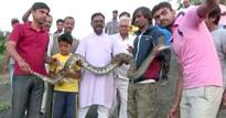 Rajasthan Man Tries Taking A Selfie With A Python. You Can Guess What Happens Next