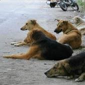 Reduce number of stray dogs in Kerala on war footing: Supreme Court panel