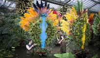 Gardening event: Kew's sensational orchid festival