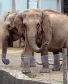 Doomed French elephants given lifeline