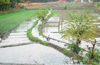 Cash crunch hits rabi sowing in Gujarat