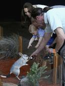 Aussies Are Shunning Bunnies And Embracing The Easter Bilby Instead
