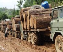 Government imposes logging ban, in latest bid to save forests