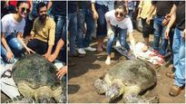 Alia Bhatt releases a 30 year old sea turtle 'Queen' at Dahanu!