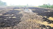 Fields on fire: Burning paddy straw