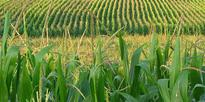 New research on ethanol production