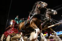 Watch Budweiser's Clydesdale Super Bowl 2016 Commercial [VIDEO]