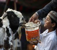 See How This Man Celebrated A 'Blood-Free Eid' Instead of Slaughtering An Innocent Goat!