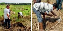 35% no topsoil, 65% fertile Singur land