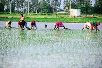 Niti Aayog projects 6% farm growth, overshooting CSO estimates
