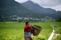 With men gone, women shake up farming in rural Nepal By Zoe Tabary