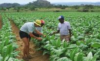 Zimbabwe: Govt Faces $30 Billion Bill for Land Expropriated From White Farmers