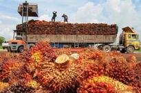 Malaysian palm oil price eases on lower China palm olein