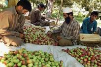 Smooth transportation of fruits from Kashmir Valley sought