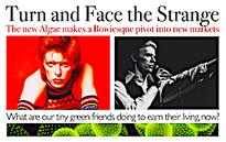 Turn and Face the Strange: The new Algae makes a Bowiesque pivot into new markets