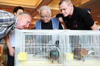 Pattaya pigeon race raises new tourism dream