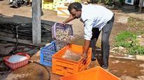 A chance to make aqua trade more transparent