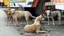 Stray dog sterilisation: Kudumbashree to open mobile operation theatres